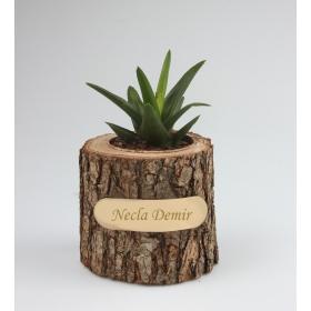 eJOYA Kişiye Özel Doğal Ağaç Skulent 86317