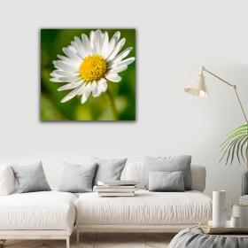 eJOYA Modern Tasarım Papatya Kanvas Tablo 50 x 60 cm 91038